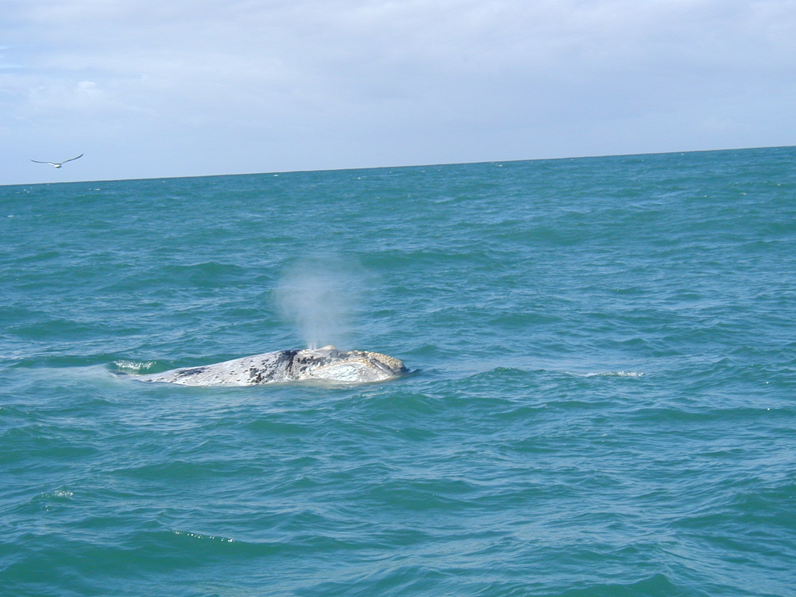 Activities spotting Whales in Jongensfontein
